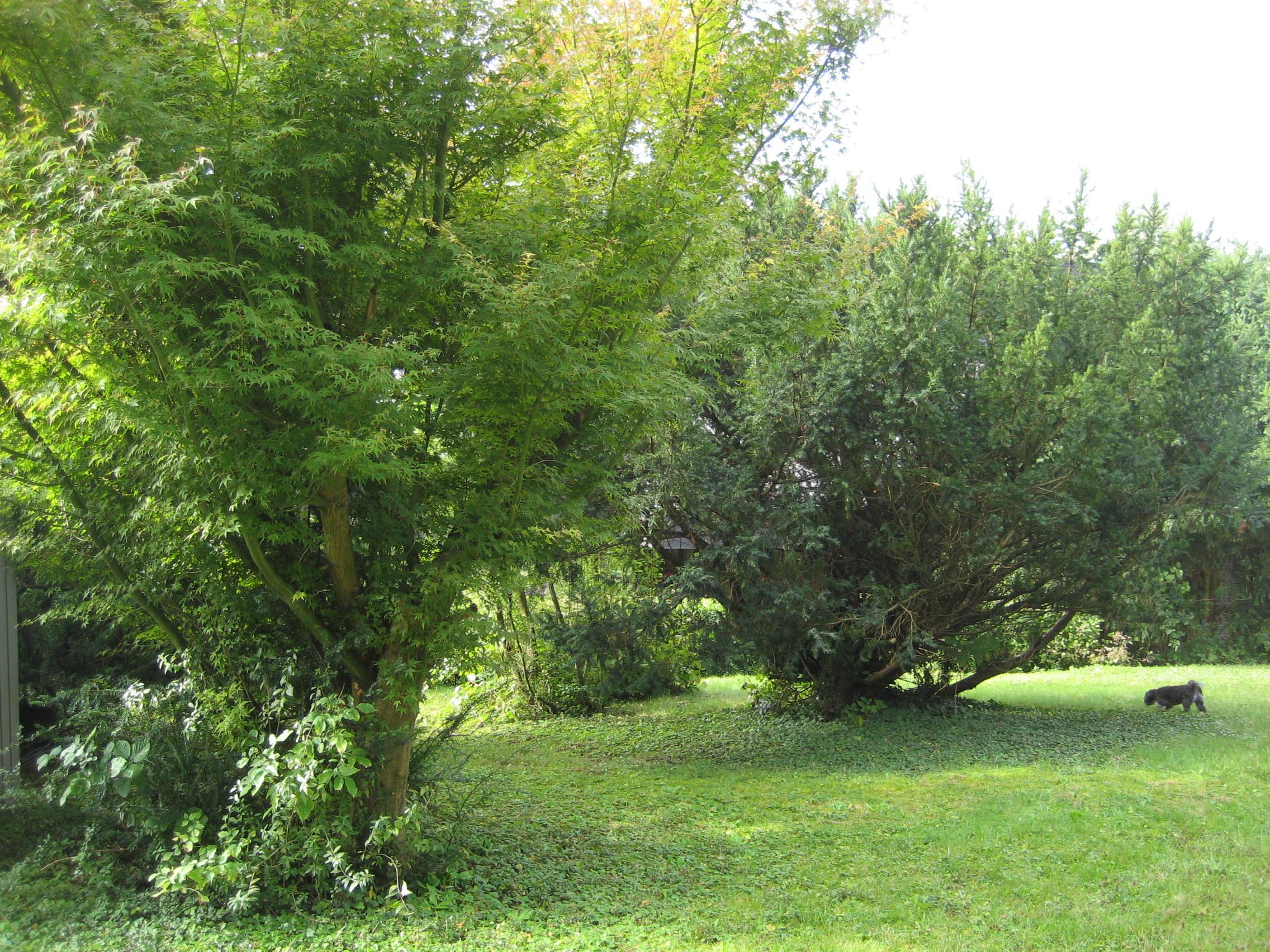garden design garden design with backyard ideas for dogs u small