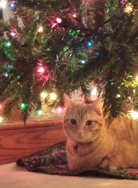Toby and tree